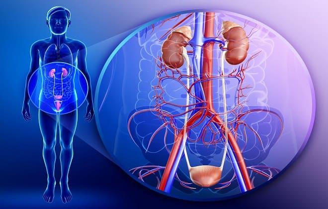 Воспаление органов репродуктивной системы
